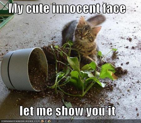 funny-pictures-kitten-plant-innocen-face