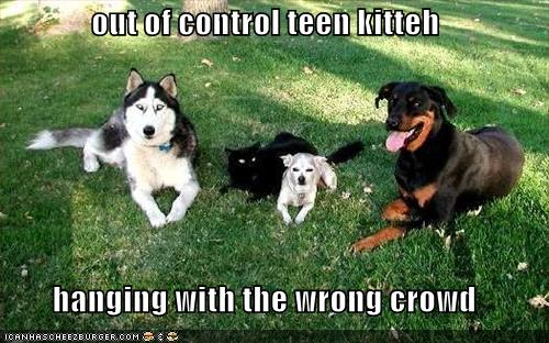 funny-pictures-black-cat-with-dogs