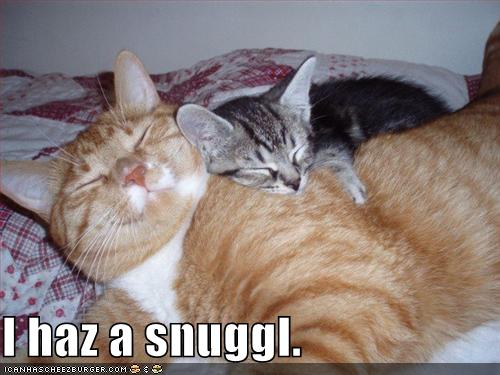 funny-pictures-cats-snuggling