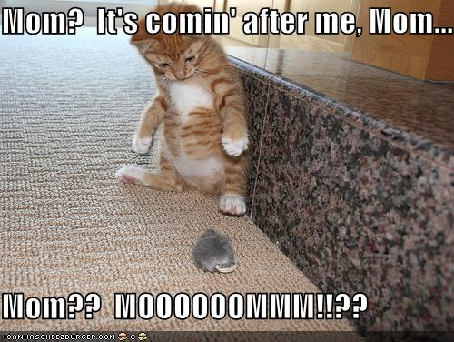 Funny Piccies - Page 3 Funny-pictures-kitten-toy-mouse