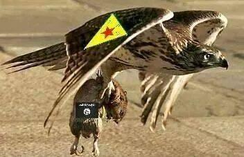PKG_eagle-ISIS_rat